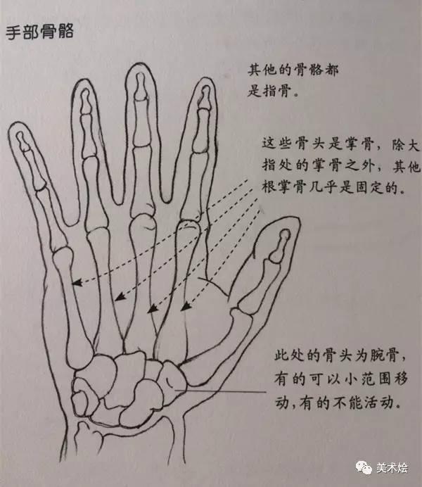 干货-手部的画法图片