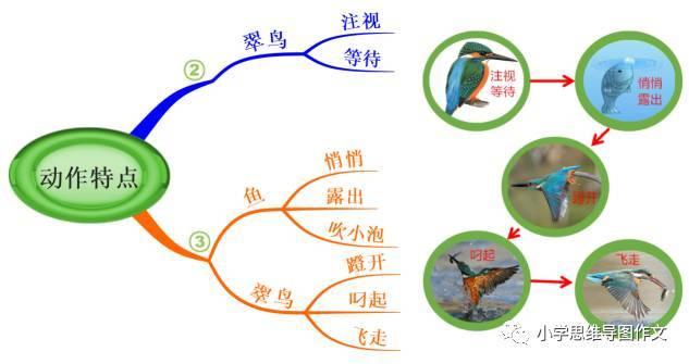 如何使用思维导图学语文,写作文:翠鸟举例分析