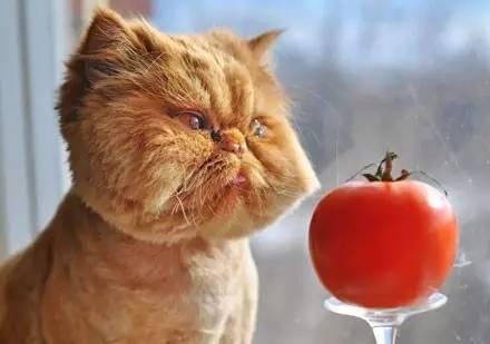 这估计是橘猫被黑得最惨的一次了.