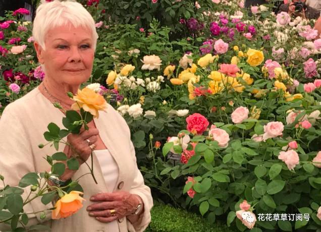 dame judi dench in planning row over phone mast near her