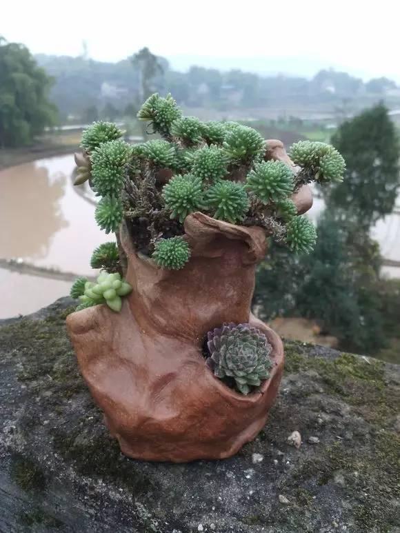 无论是那一个个泥土烧制的花盆,还是那些废物利用制成的花盆很好看啊