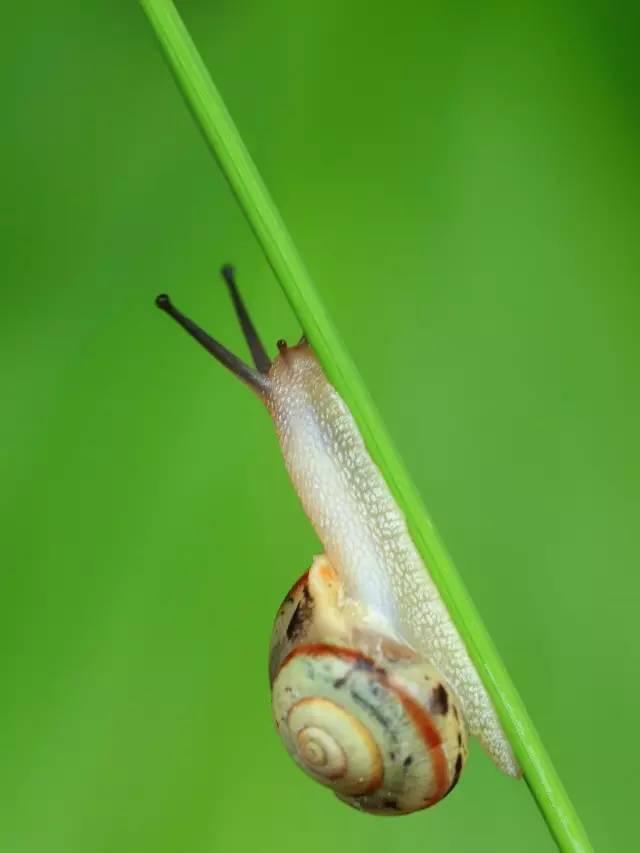 《动物类:野外兔子》蜗牛周公解梦原版图片