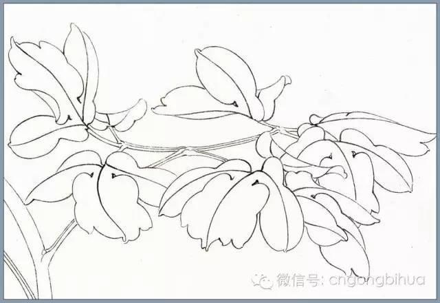 【工笔画教程】工笔牡丹叶子画法步骤图解图片