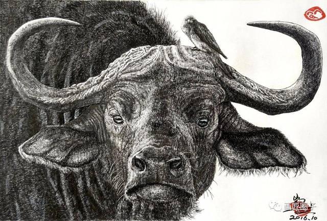 (群内)大kai的动物钢笔画,没毛病!