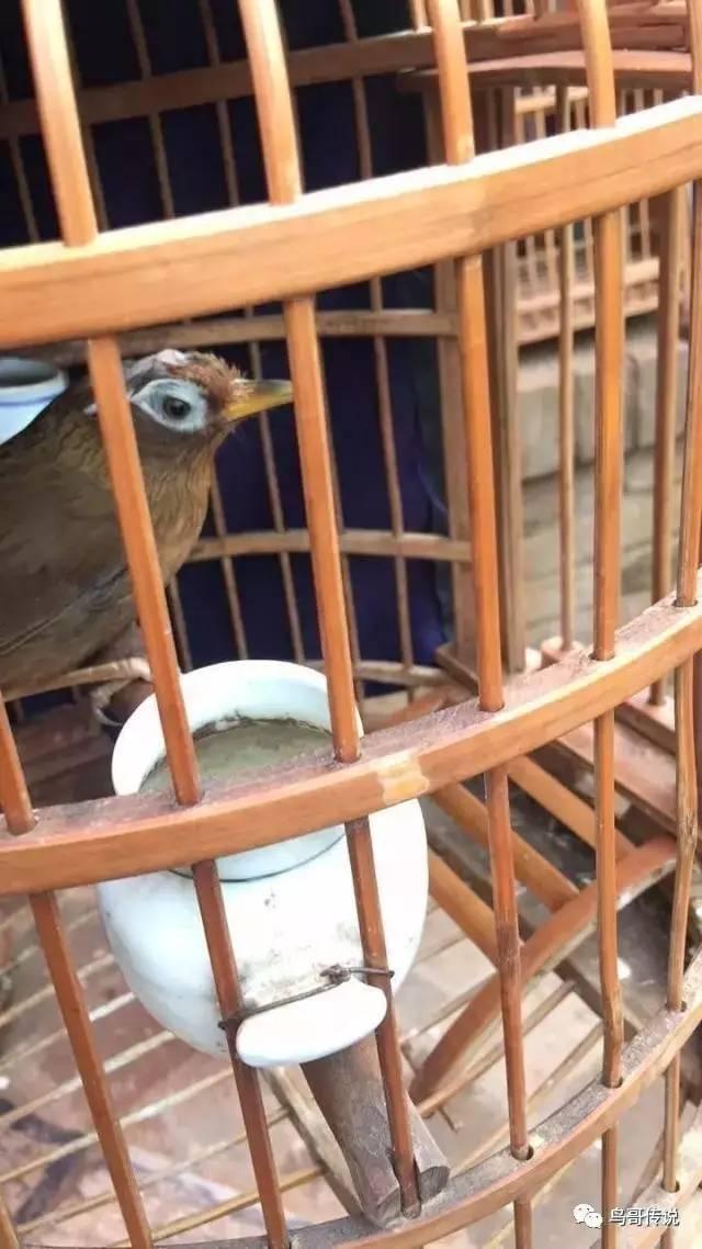 壁纸 动物 鸟 鸟类 雀 640_1138 竖版 竖屏 手机