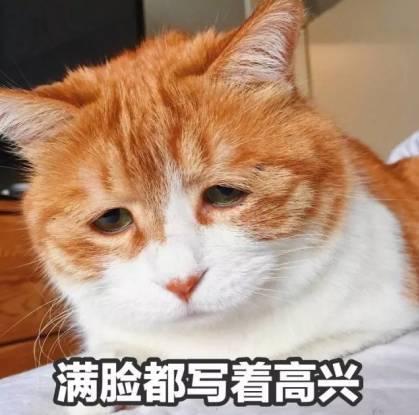 染上猫毒的我, 为大家整理了一些表情包和3d动漫电影, 准备好沦陷吧!