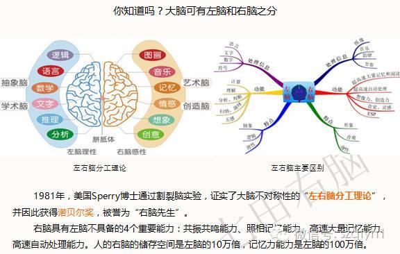 左脑��!$_左脑是慢速脑,抽象脑,意识脑,逻辑脑;右脑是快速脑,艺术脑,潜意识图