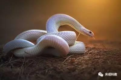自然传奇 ▏蛇的隐秘生活