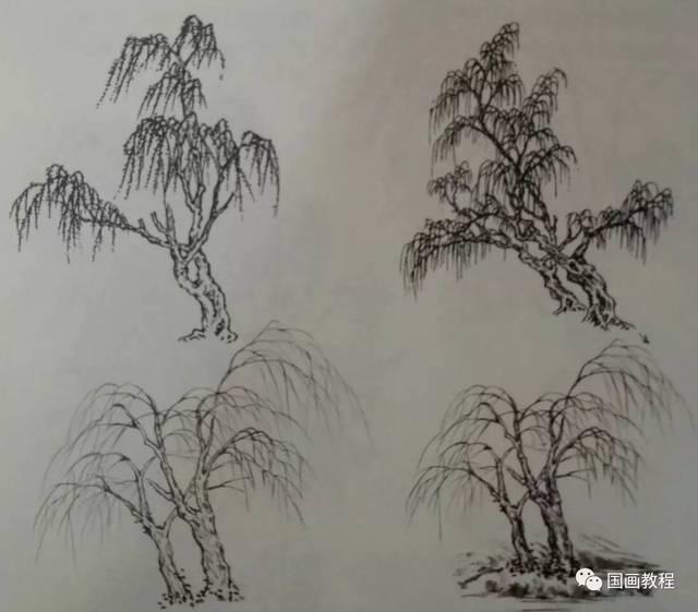 柏树 杨柳的画法