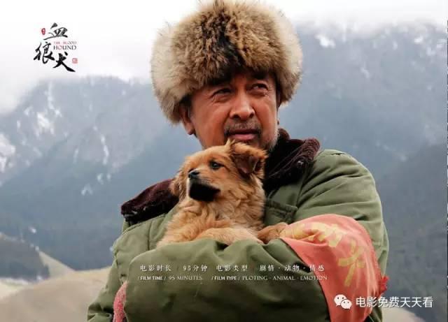 黄宏喜剧电影_电影《血狼犬》人与动物情感教育意义-免费在线观看