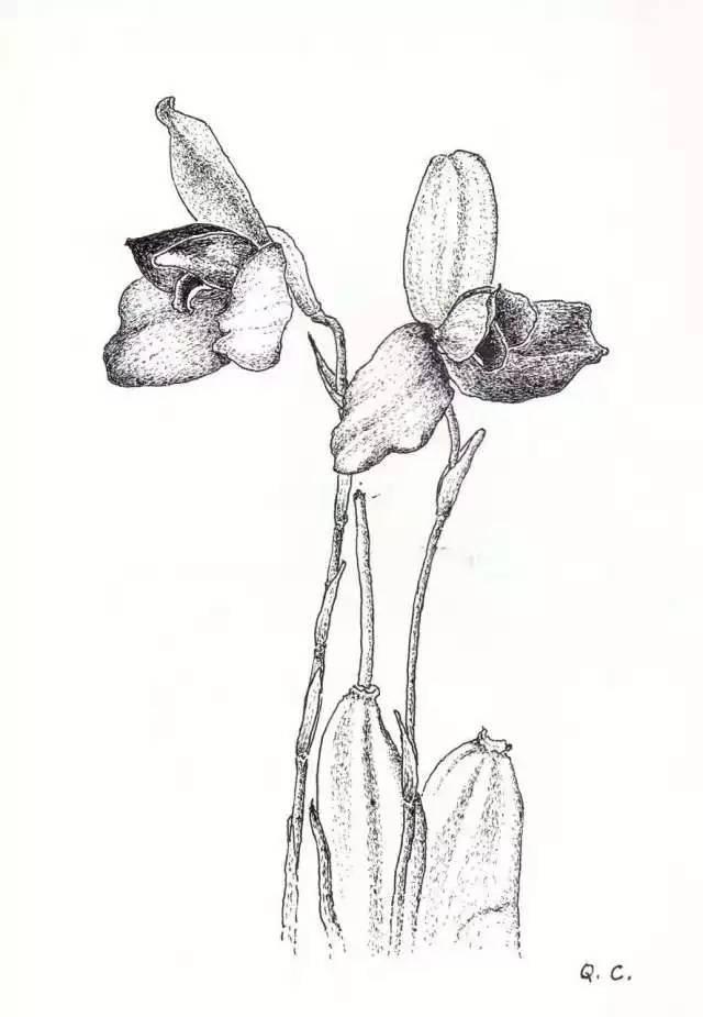 人生七十始,成植物手绘达人