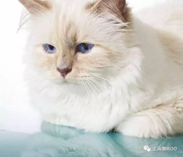 壁纸 动物 猫 猫咪 小猫 桌面 640_549