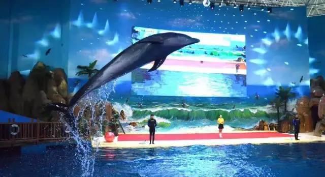 海洋馆 海豚馆通票仅65元,去临沂海洋世界狂欢夜场 吃美食吧