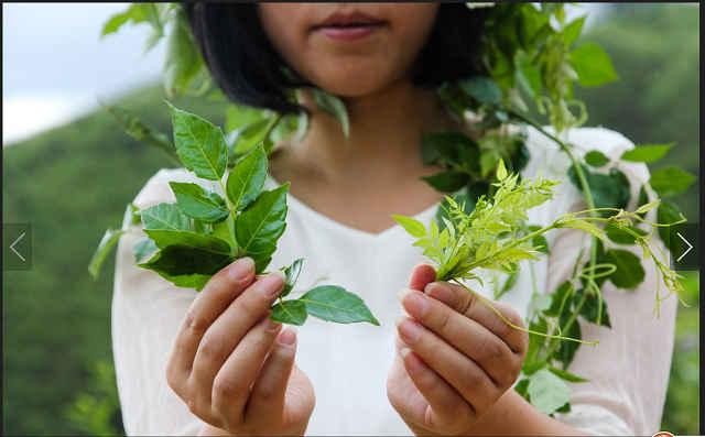 莓茶的功效是真是假?对咽喉炎有效吗?