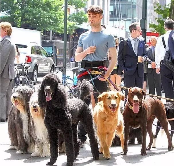 做为一个养狗的人,由于有遛狗的刚需,你会更加活跃,会更加多的外出,和