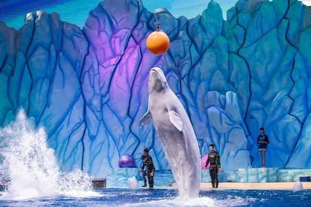广州长隆野生动物园,大马戏,海洋王国,飞鸟乐园双卧纯玩六天