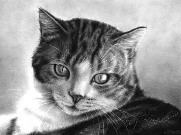 30张猫咪铅笔画,画猫猫的参考哦