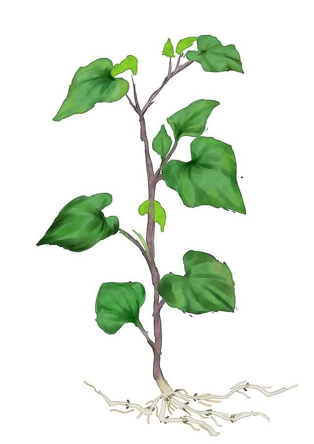 背景 壁纸 绿色 绿叶 树叶 植物 桌面 640_905 竖版 竖屏 手机图片