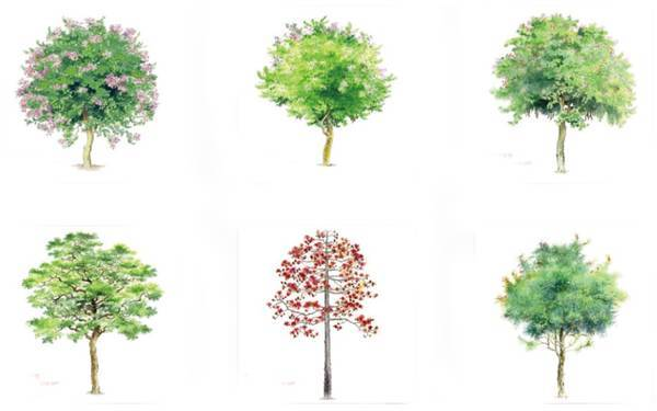 自然界中的树木明暗丰富,手绘时运用黑白灰三部分合理表现即可,况且