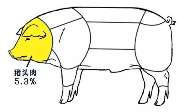 猪头动漫简笔画