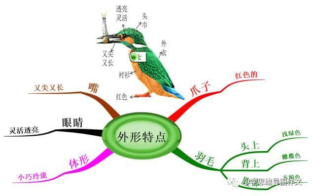 5.17 如何使用思维导图学语文,写作文:翠鸟举例分析