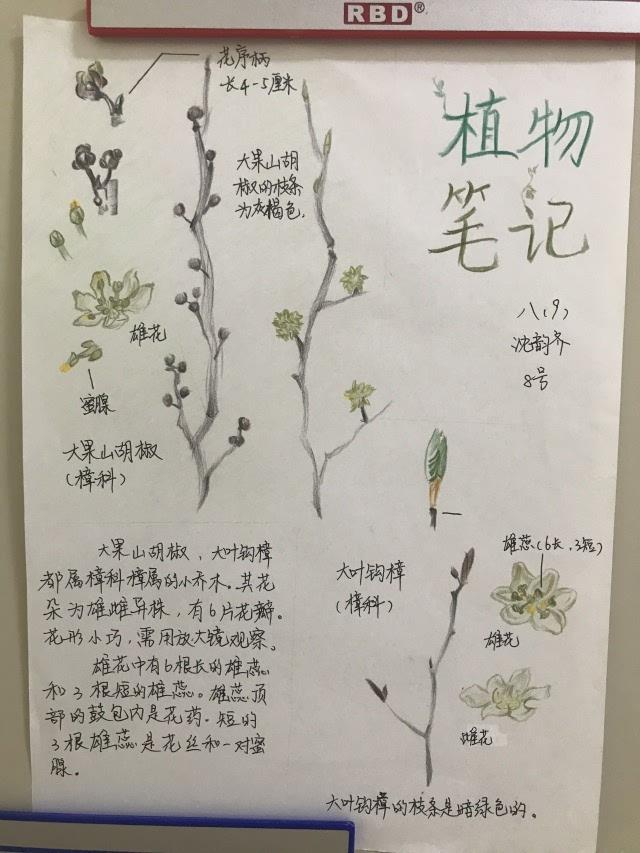科技节系列活动丨走进植物的世界 绘制我的自然笔记