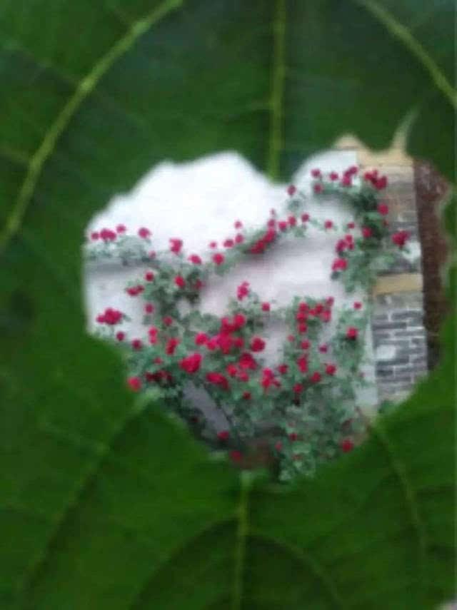 方形窗棂花矢量图
