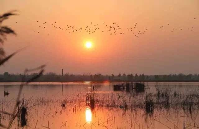 濉溪投资3亿打造凤栖湖湿地公园,会建成什么样?