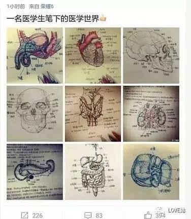 """""""切了一上午的子宫"""",手绘人体解剖图解压!福州这女研究生丫霸"""