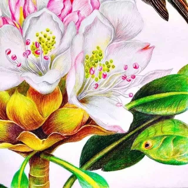 彩铅达人绘 | 水绿 的彩铅花鸟作品欣赏