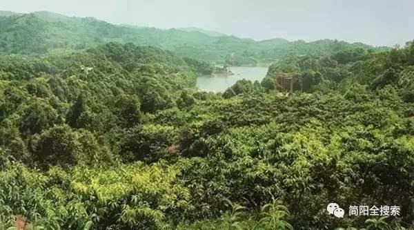 油橄榄主题园,金堂山森林公园,龙泉驿区生态移民区植被恢复,青白江图片