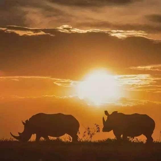 看这个世界人与动物的相处,看动物大迁徙,看夕阳下动物的追逐与踱步