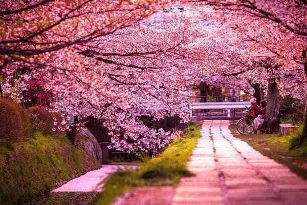 樱花公园,南靠中山东路东段,东接中兴路,北邻中塘河,又名中兴樱花公园