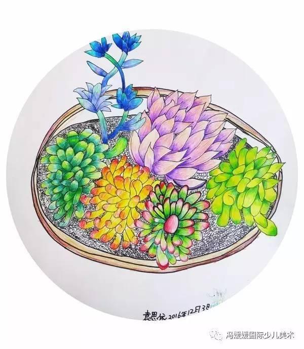《彩铅多肉植物》