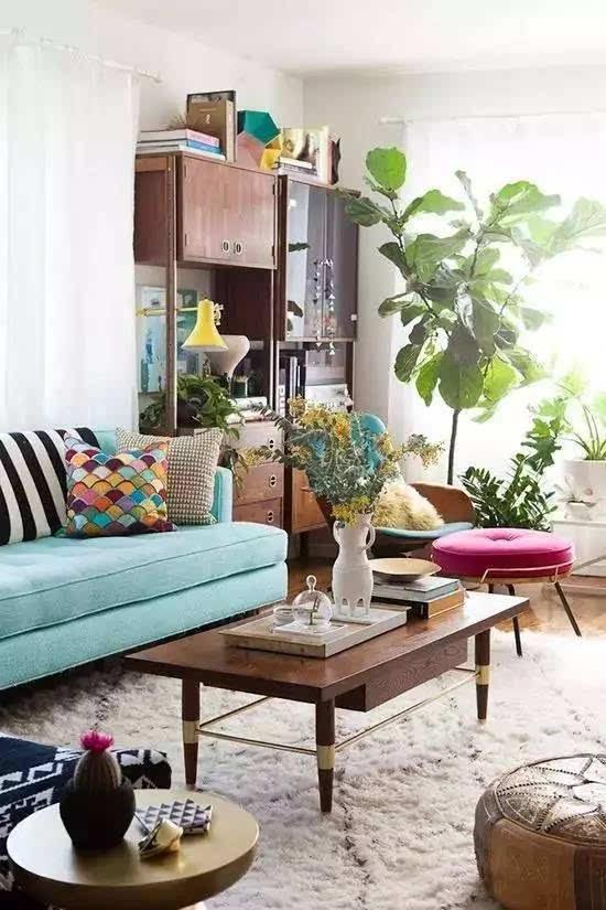 """琴叶榕可谓是北欧风绿植里的著名""""网红"""",它可以生长到12米的高度图片"""