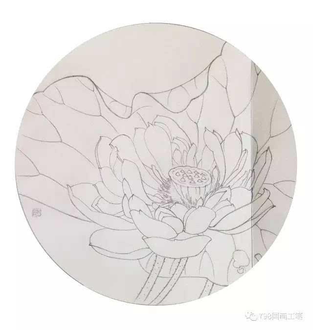 【图文教程】工笔荷花,牡丹,玉兰步骤画法,美美哒