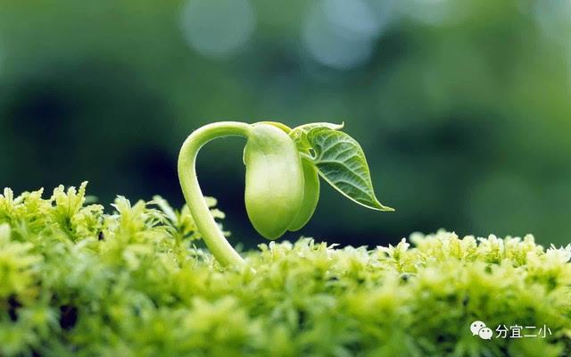 """""""""""小种子……""""终于小种子发芽了,第二天长出嫩枝,嫩叶,第三天长出花苞"""