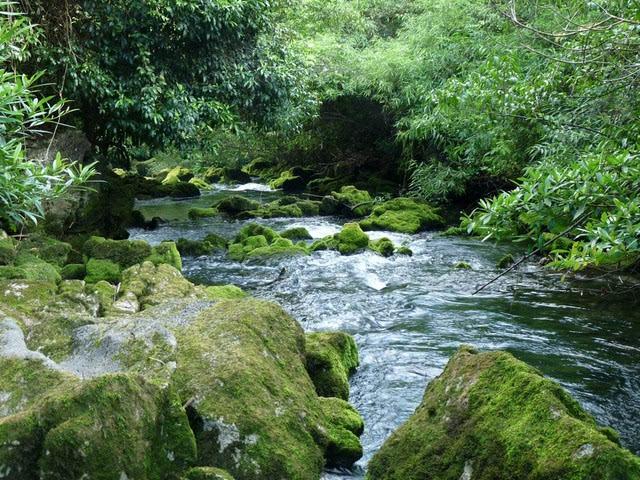 茂兰喀斯特森林是一处珍贵的风景资源,却在一定程度上超脱了喀斯特