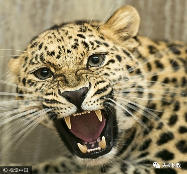 自然传奇 ▏亚马逊丛林的较量-宠物频道-手机搜狐