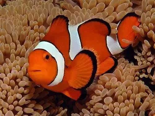 【海洋课堂】海洋动物千奇百怪的睡觉方式