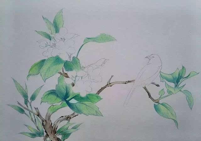 简单手绘小鸟彩铅