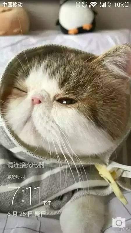 壁纸 动物 猫 猫咪 小猫 桌面 450_800 竖版 竖屏 手机