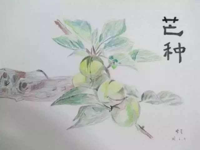 燕子彩铅简笔画
