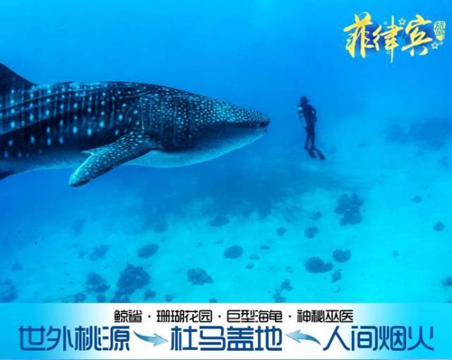 杜马盖地看鲸鲨·寻海龟六天四晚自由行
