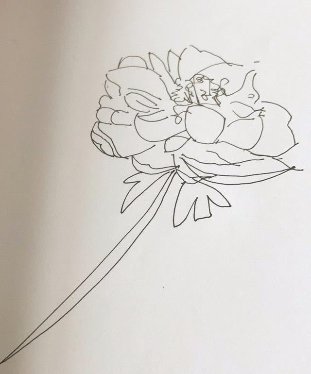 手绘芍药简笔画