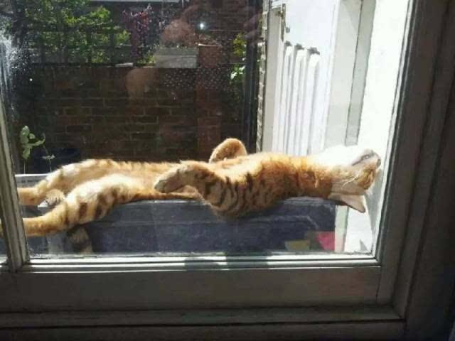 剃毛之后猫大爷还怎么晒太阳?图片来自The Daily Kitten-亲爱的毛,我