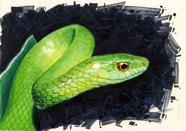 手绘蛇彩铅