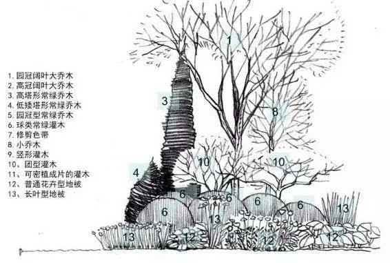 环艺手绘植物灌木