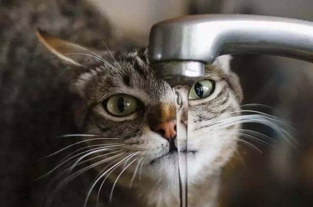 动物喝水 gif