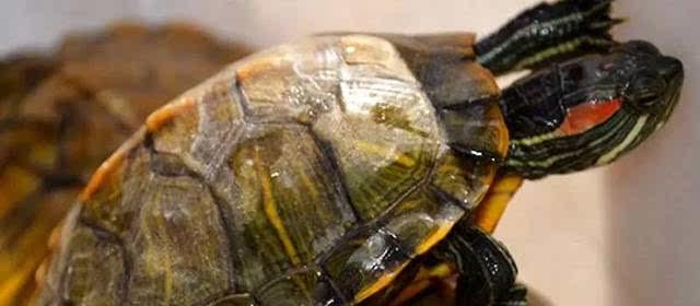 乌龟壳背饰手工制作大全图片